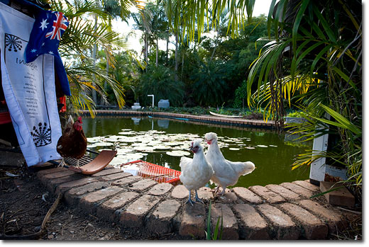 swimming_pool_pond_chickens